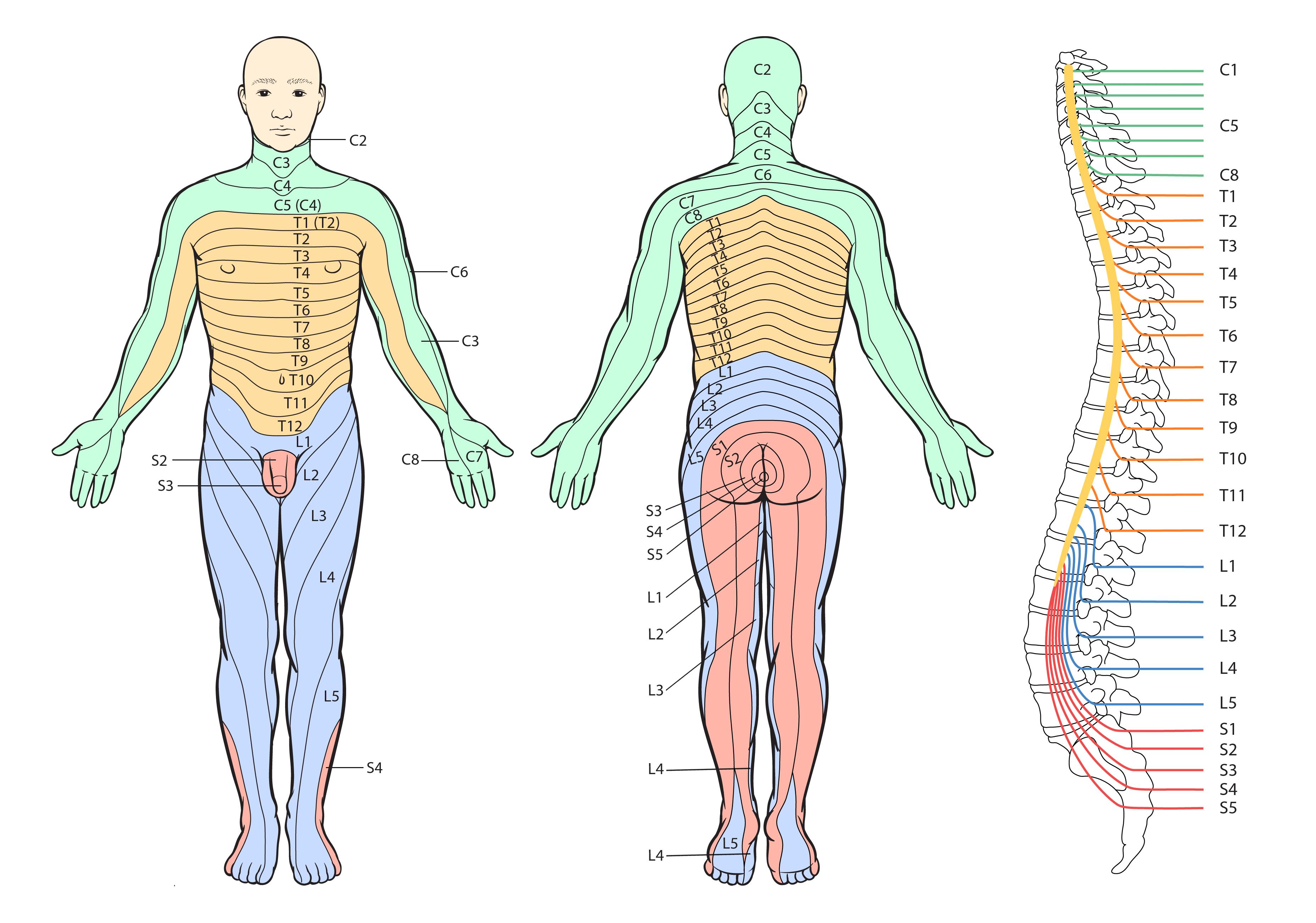 Lihasheikkous jaloissa