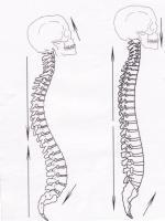 Движения на гръбначния стълб при позицията на стълба