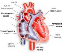 Анатомия на сърцето